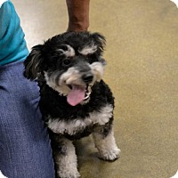 Adopt A Pet :: Cody #1201 - Arlington Heights, IL