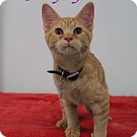 Adopt A Pet :: Grapefruit - Bradenton, FL