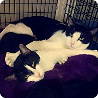 Adopt A Pet :: Lexi&Luther - yuba city, CA
