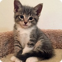 Adopt A Pet :: Roxy - Troy, MI