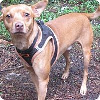 Adopt A Pet :: Shakey - Voorhees, NJ