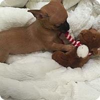 Adopt A Pet :: Macchi - Valencia, CA