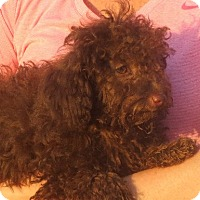 Adopt A Pet :: Lyza - Greenville, RI