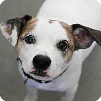 Adopt A Pet :: LYEFOO - Pittsburgh, PA
