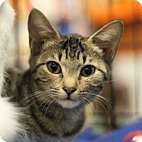Adopt A Pet :: Bitz - Marietta, GA