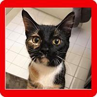 Adopt A Pet :: Peanut - Mt. Clemens, MI
