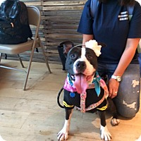 Adopt A Pet :: DOUBLE-STUFF! - Bridgewater, NJ