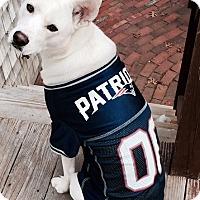 Adopt A Pet :: Luna GO PATS! - Harmony, Glocester, RI