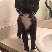 Adopt A Pet :: Lillian - Gainesville, FL