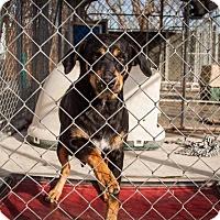 Adopt A Pet :: Rhue - Murphysboro, IL