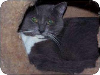 Domestic Shorthair Cat for adoption in Winnsboro, South Carolina - Emma