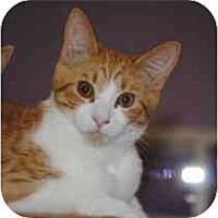 Adopt A Pet :: Andy - Marietta, GA