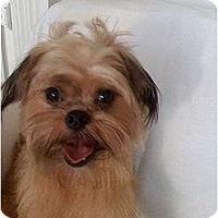 Adopt A Pet :: CHARLIE in Savannah, GA - Cumming, GA
