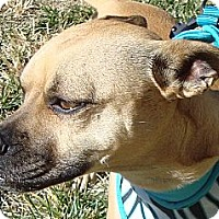 Adopt A Pet :: Gertie - Arenas Valley, NM