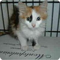 Adopt A Pet :: Olympia - Island Park, NY