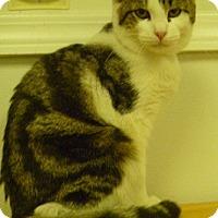 Adopt A Pet :: Amigo - Hamburg, NY
