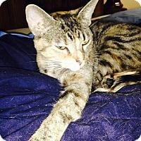 Adopt A Pet :: Izabella - Olive Branch, MS