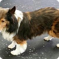 Adopt A Pet :: Penny - COLUMBUS, OH