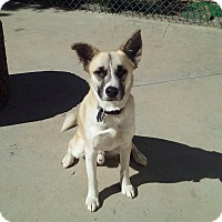 Adopt A Pet :: Rudy - North Hollywood, CA