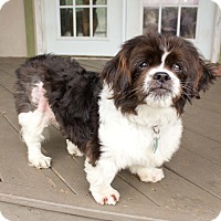 Adopt A Pet :: Rudy - Virginia Beach, VA