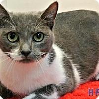 Adopt A Pet :: Charlie Bean - Sebastian, FL