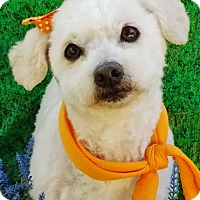 Adopt A Pet :: Blanca - Irvine, CA