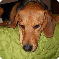 Adopt A Pet :: Archie **Courtesy Cupid** - West Allis, WI
