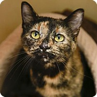 Adopt A Pet :: Honeychild - Kettering, OH