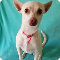 Adopt A Pet :: Val - Yucaipa, CA