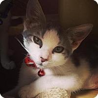 Adopt A Pet :: Alexandra (foster care) - Philadelphia, PA