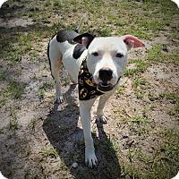 Adopt A Pet :: Diesel - Umatilla, FL
