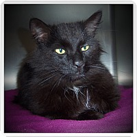 Adopt A Pet :: KAZOO - Medford, WI