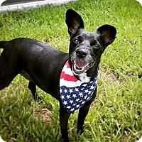 Adopt A Pet :: Ruthie - Lehigh Acres, FL