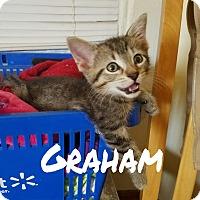 Adopt A Pet :: Graham - Chicago, IL