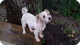 Terrier (Unknown Type, Small) Mix Dog for adoption in Port Clinton, Ohio - Nina