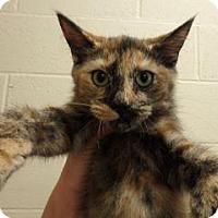 Adopt A Pet :: Princess #158018 - Apple Valley, CA