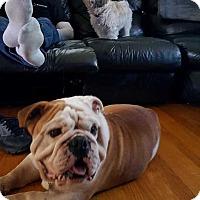 Adopt A Pet :: Dozer - Coopersburg, PA