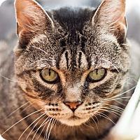 Adopt A Pet :: Winter - Brimfield, MA
