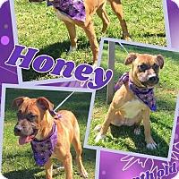 Adopt A Pet :: HONEY - Lexington, NC