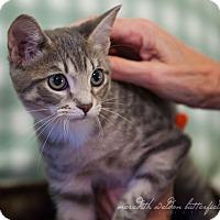 Adopt A Pet :: Matilda - Flower Mound, TX