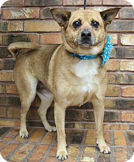 Terrier (Unknown Type, Medium) Mix Dog for adoption in Benbrook, Texas - Bella