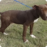Adopt A Pet :: Tanner - Olive Branch, MS