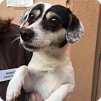 Adopt A Pet :: Dagney - Westminster, CA