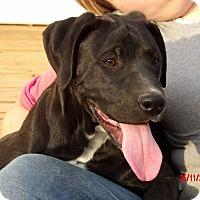 Adopt A Pet :: Keno (35 lb) Smart Puppy! - Niagara Falls, NY