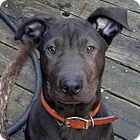 Adopt A Pet :: Drake - Pacific Grove, CA