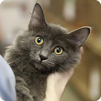 Adopt A Pet :: Garland - Kettering, OH