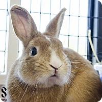 Adopt A Pet :: Benjamin - Burlingame, CA