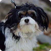 Adopt A Pet :: Bailey - East Brunswick, NJ