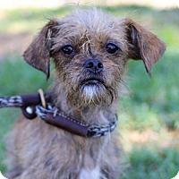 Adopt A Pet :: Tiramisu - San Diego, CA