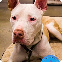 Adopt A Pet :: Bacardi - Staten Island, NY